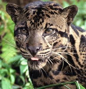 large cats big cats images big cats wallpaper and background photos