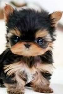 mini, chien, , , 40, petites, boules, de, poils, , u00e0, croquer