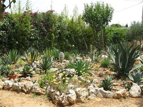 foto giardini rocciosi giardini rocciosi forum di giardinaggio it