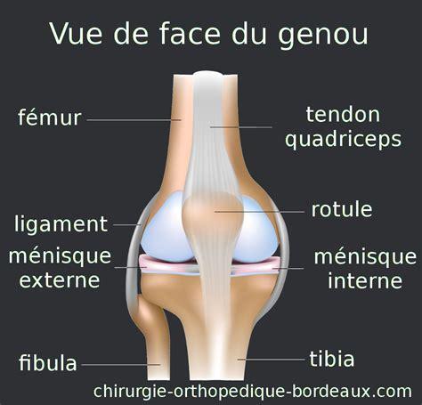 chirurgie orthop 233 dique 224 bordeaux dr metmer