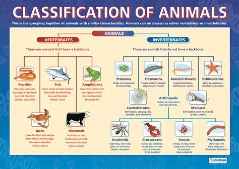 Animal Characteristics Lessons Tes Teach