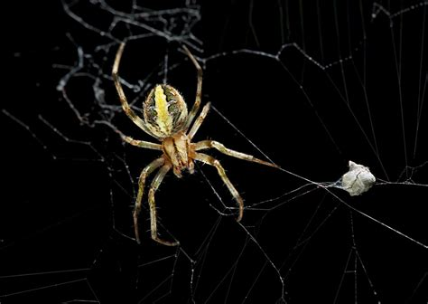 Want To Know What's The Life Of A Garden Spider Like? Take