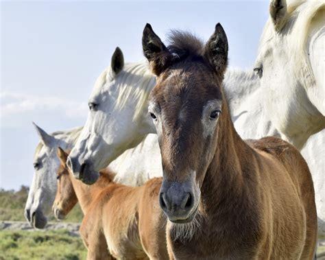 Pferd & Co
