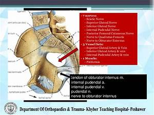Acetabulum Anatomy Images - Reverse Search
