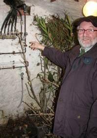 Hortensien überwintern Im Keller : berwinterung von k belpflanzen im keller 02 abutilon und ~ Lizthompson.info Haus und Dekorationen