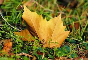 Garten Im Herbst : der garten im herbst winter bauspezi baumarkt ~ Whattoseeinmadrid.com Haus und Dekorationen