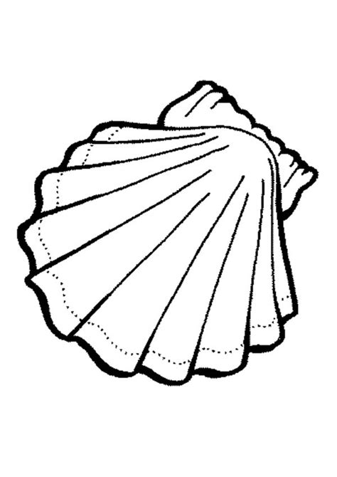 shells colouring clipart
