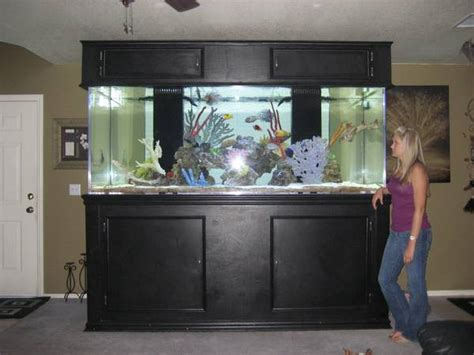november  giant aquariums