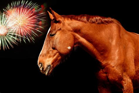fireworks horse anxiety riding