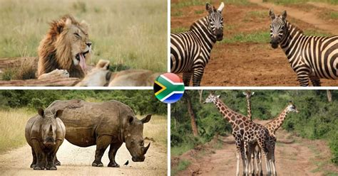 Africa has strange animals, while some look like elephants yet they are not actually elephants the aardwolf is neither a wolf but a small mammal, that looks similar to the most dangerous animal in the african savanna as far as the lion is concerned. African Animals List / List Of African Animals Beginning With Letters A To Z - r4ph-connected-2 ...
