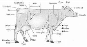 Livestock Tests And Study Guides