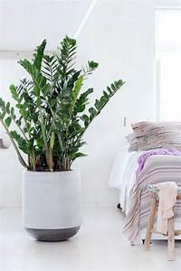 Pflanzen Für Schlafzimmer : die richtige zimmerpflanze f r das schlafzimmer schlafzimmer ~ Eleganceandgraceweddings.com Haus und Dekorationen