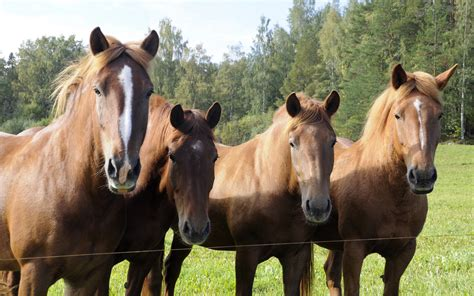 horses different types horse flickr they yours which pasture mares cc source talking almost know re horsenation