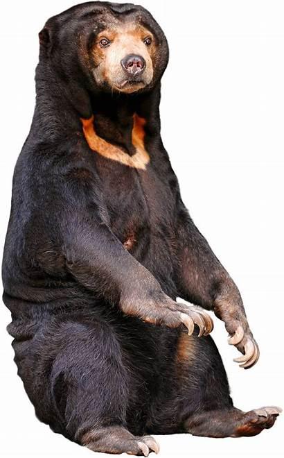 Bear Sun Vs Wikia