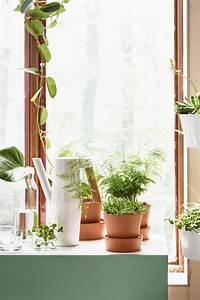 Pflanzen Bei Ikea : bittergurka gie kanne wei garten balkon und terrasse ~ Watch28wear.com Haus und Dekorationen