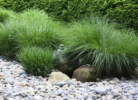 hardy grasses for the garden usda zone low maintenance landscaping 17 great ideas bob vila