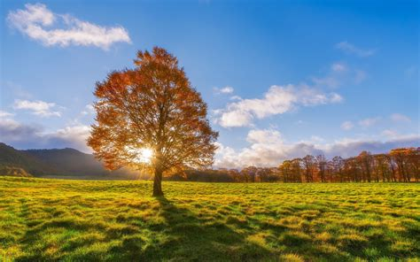 Autumn 4k Uhd Wallpapers by Wallpaper Trees Meadow Autumn 3840x2160 Uhd 4k