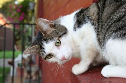 katzenhaltung in mietwohnung streitfall tierhaltung vermieter kann katzenhaltung nicht generell untersagen