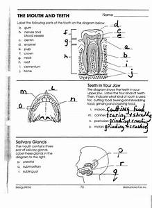 The Mouth And Teeth