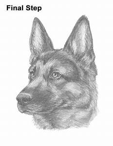 How To Draw A German Shepherd Video U0026 Step By Step Pictures