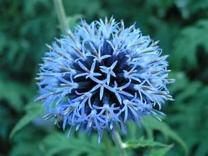 Welche Blume Steht Für Leben : severine blume bilder news infos aus dem web ~ Whattoseeinmadrid.com Haus und Dekorationen