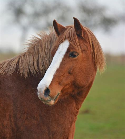 hearing horses fei equine facts enrich knowledge campus modules range check help hear