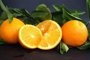 Wie Isst Man Grapefruit : alles was man ber orangen wissen muss citrus ricus ~ Eleganceandgraceweddings.com Haus und Dekorationen