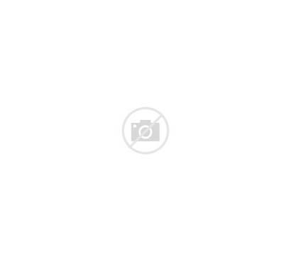 Paint Magic Horse