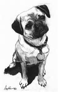 Pug Pencil Drawing