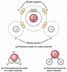 This Figure Shows The Structure Of A Water Molecule  The