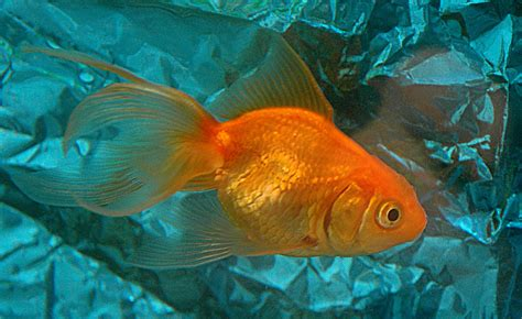 salt water aquarium fishkeeping