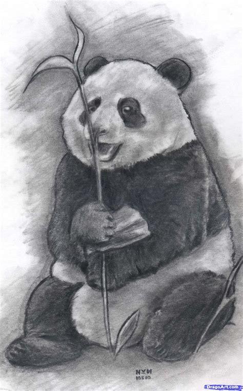 draw  realistic panda draw real panda step