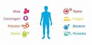 Stress  U0026 Your Immune System