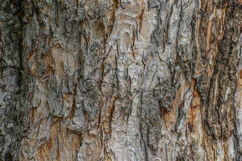 tree bark texture tree bark texture high quality free backgrounds
