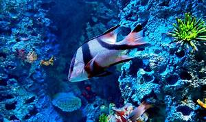 Marine Life Wallpapers - Wallpaper Cave
