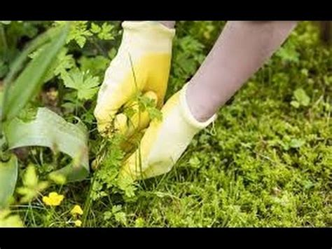 Keep Weeds Out Of Garden by Best Way To Keep Weeds Out Of Your Flower Garden