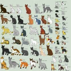 different types of cats types of cats cat types cats types of