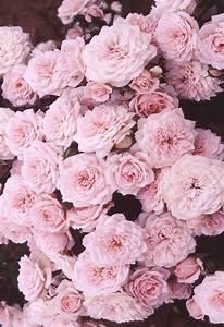 Roses iphone wallpaper | Wallpapers | Pinterest | Pink ...