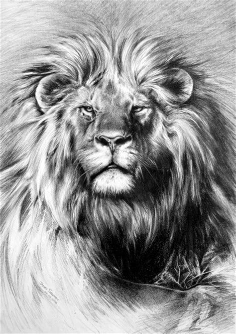 lion drawing  pencil drawings art gallery