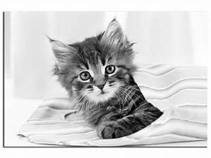 Tableau Moderne Noir Et Blanc : cadre moderne chaton noir et blanc prix r duit boutique hexoa ~ Teatrodelosmanantiales.com Idées de Décoration