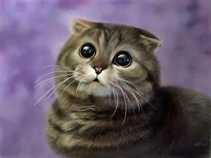 Cute Scottish Fold Cat | Scottish Fold Cats Wallpapers ...