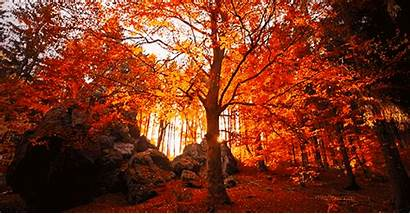 Tree Nature Gifs Giphy Landscape