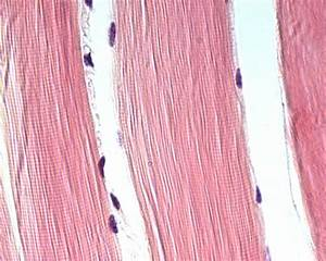 Histology Page