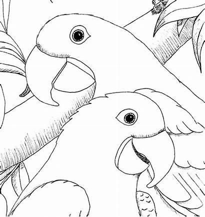 Coloring Hyacinth Kleurplaten Macaws Macaw Colorare Tekeningen