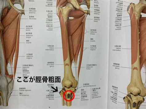 膝 の 裏側 が 痛い
