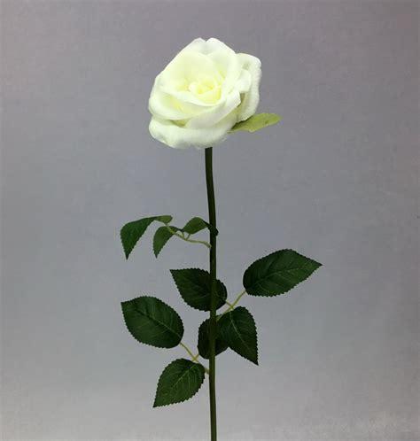 ดอกกุหลาบ cream