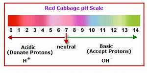 Red Cabbage pH Scale | Su Ying's SIP Logbook