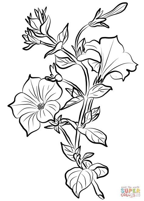 Coloring Drawings by Petunia Coloring Page Free Printable Coloring Pages