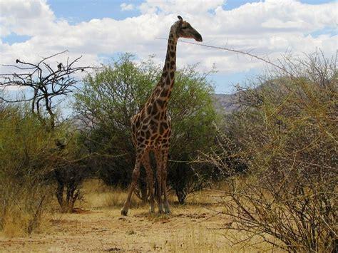 plateau canap erongo plateau c omaruru accommodation and hotel reviews