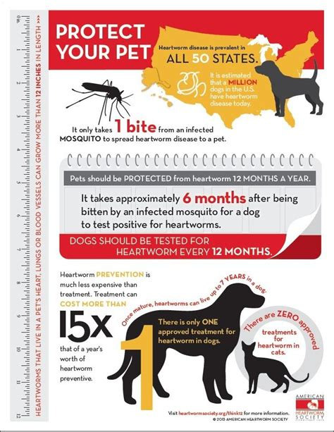 heartworm treatment heartworm prevention is much less expensive than treatment in fact treatment can cost more